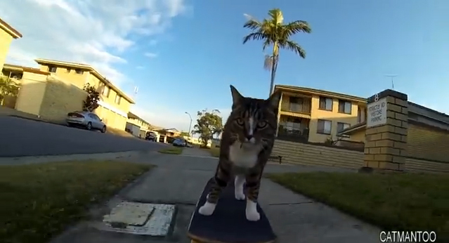 Digda the skateboarding cat